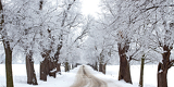 winters tree alley