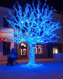 Fotografia Blue Fairy- Lit Tree