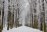 beautiful winters tree alley