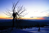 Mountains. Dry tree, snow and sunrise. Lysa hora - Beskydy.