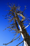 Photo Mountains. Dry tree and blue sky. Lysa hora - Beskydy.