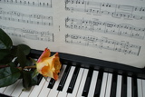 Fotografia Rose on piano with notes.