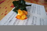 Rose with notes.