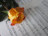Fotografia Rose with notes.
