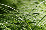 the grass in detail