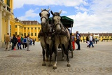 Schönbrunn, horse, carriage, carriage and transportation. Vienna - Austria.