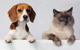 Fotografie cat and dog