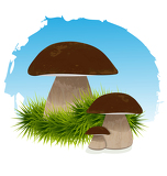 Mushrooms in grass under blue