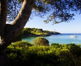 Sea, tree, bay, yacht and lighthouse. Island of Mallorca - Portocolom.