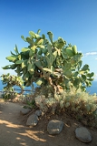 vegetation near the coast of capo vaticano region calabria  italy