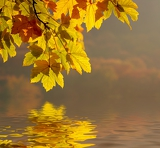 autumn leaves and their reflection in water