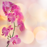 Fotografia beautiful orchid and blur bokeh