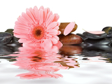 Fotografia spa stones and pink daisy on isolated white background