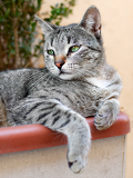 Fotografie portrait of sweet pet cat