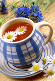 cup of herbal tea  chamomile and flowers