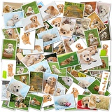 a collage of photos of golden retriever a collection of photos isolated on a white background which can be found in high resolution in my portfolio