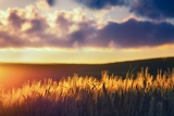 Fotografie sunset in the open countryfocus with shallow depth of field
