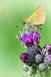 Photo a small butterfly sitting on flower