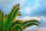 Fényképek palm tree on blue sky background