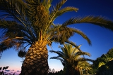 Fotografia palm tree on background evening sky