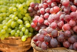 Fotografie red and white grapes of different varieties
