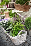 herb leaf selection in a rustic wooden basket including rosemary purple and variegated sage lemon balm oregano and flower