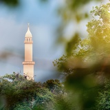 view of the minaret through the branches of a tree