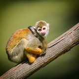 Photo a small monkey sitting on a tree branch