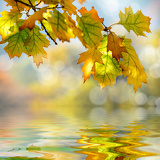 a beautiful autumn background with falling leaves