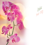 beautiful orchid border with space for your text