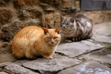 Fotografie two cats sitting in a dark alley