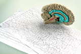 Fotografia model human brain and a graph of the brain