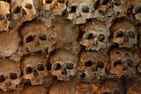 Fotografia wall full of skulls and bones