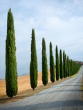 Photo cypress alley in tuscany italy