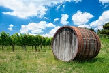 Fotografie wine wine barrel and background of vineyard on a bright summer day in tuscany