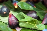 ripe fig fruits and leaf
