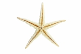starfish from oceans deep water on white background