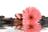 Fotografia spa stones and pink daisy on isolated white background and their reflection in water