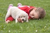 Fotografie little girl with a golden retriever puppy