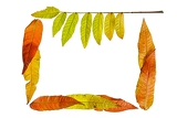 Fotografie colorful autumn leaves on white background
