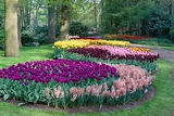 a view of a park full of flowers