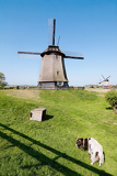 Fotografia dutch mill with goat in front in netherlaands