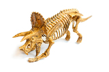 Fotografia trex skeleton isolated on white background