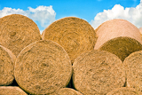 Fotografie straw stack for animal feed