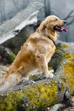 Fotografie beautiful portrait of a dog in a natural environment