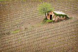 Photo summer vineyard  with wine cellar in tuscany
