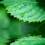 Photo green leaves reflecting in the water shallow focus