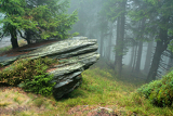 Fotografie rock in mist of forest