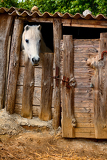 Photo beautiful old wooden stable horse