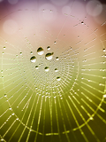 after the rain the hidden beauty of this cobweb